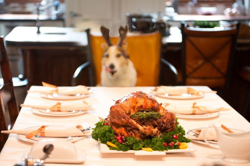 A dog sitting at the Thanksgiving table