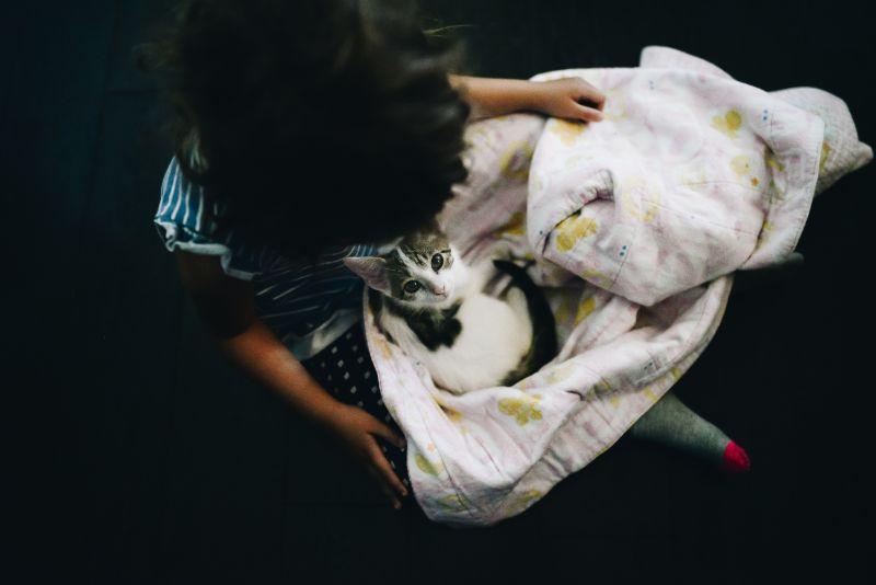 A kitten in a blanket