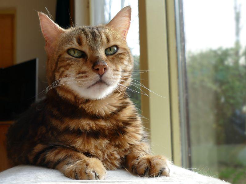 A cat sitting in a window
