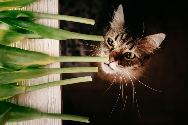 Sacramento cat with poisonous plant