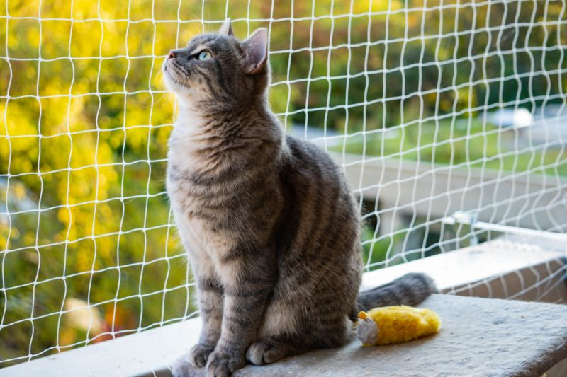 A cat sitting out by a netting