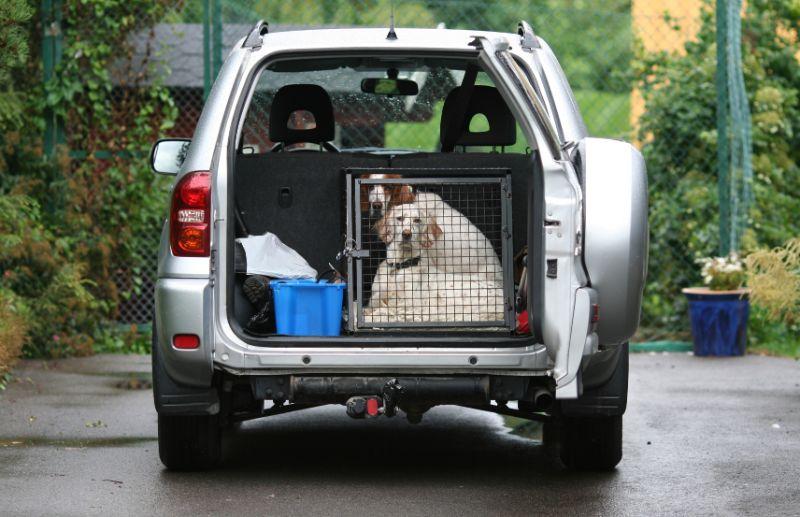Sacramento Pet Safety: Dogs in Car