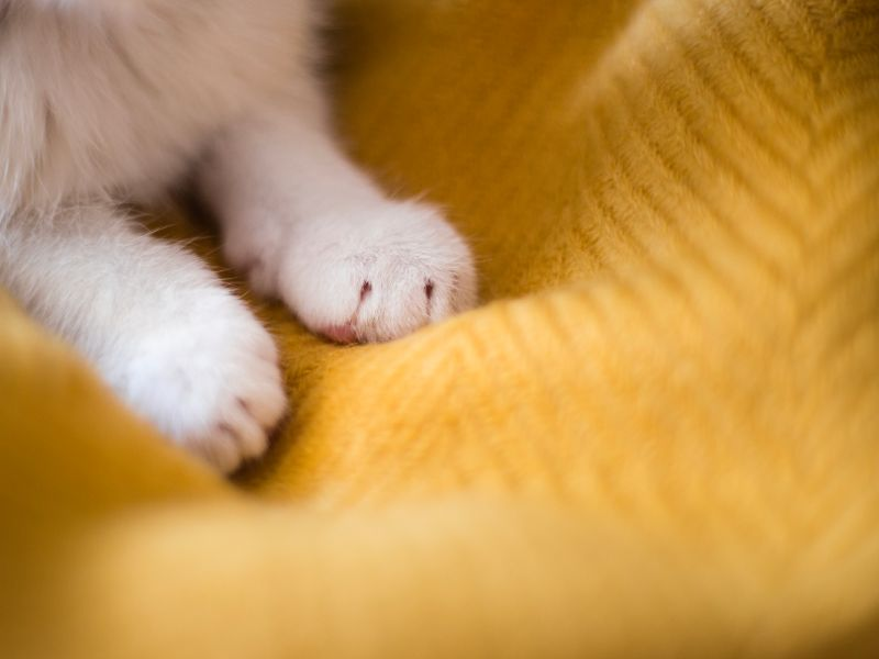 Close-up of cat paws.