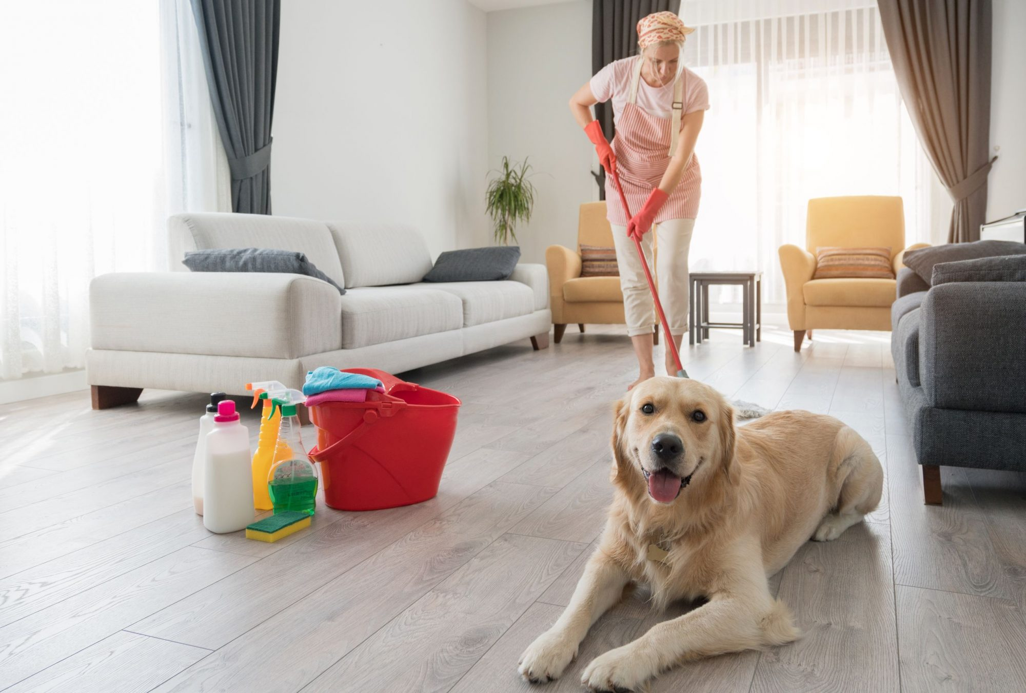 A dog smiles as a woman cleans the floor behind him.