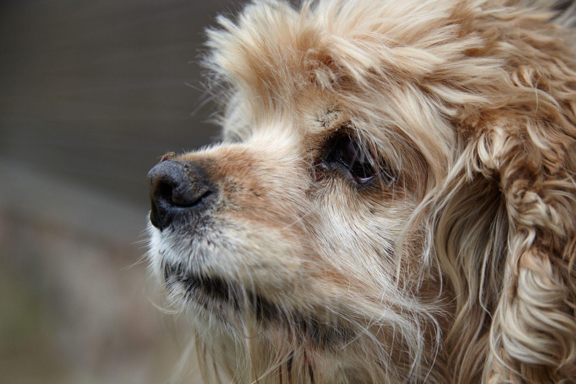 Sacramento dog with heartworm.