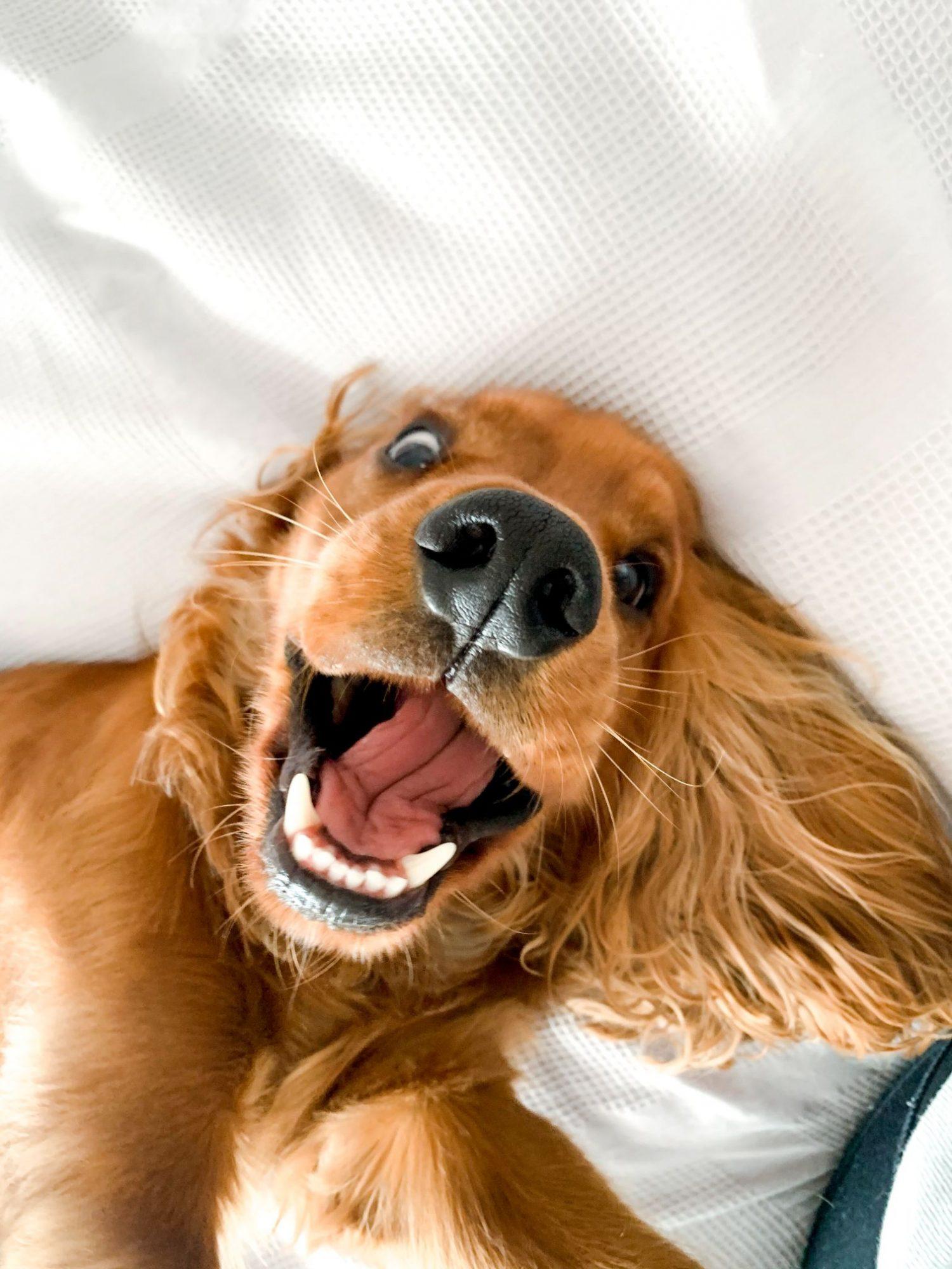 Dog wellness.